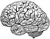 Gehirn-Strich-100